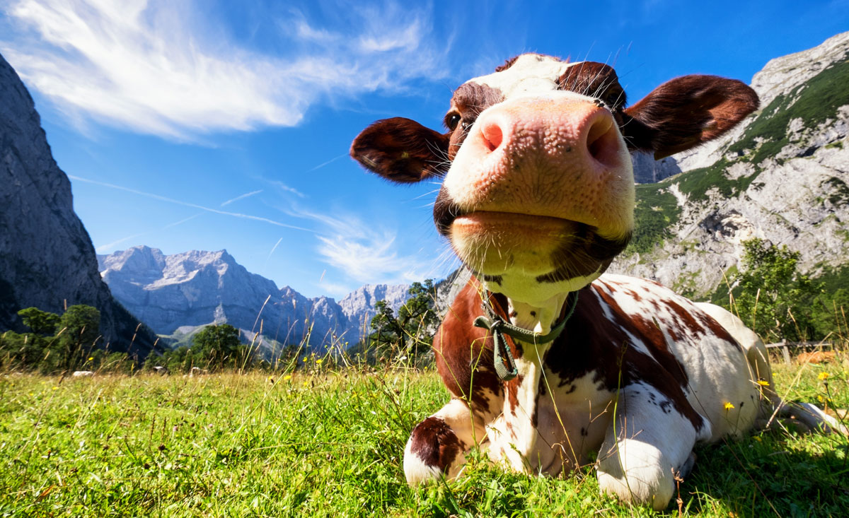 Almurlaub Salzburger-Land